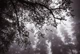 Coastal Tree Design, Northern California Photographic Print by Vincent James