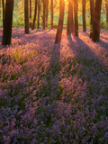Bluebell Sunset II Photographic Print by Doug Chinnery