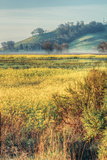 Morning Scene at Coyote Hills, Fremont California Photographic Print by Vincent James