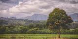 Kauai Tree Landscape (Wide) Photographic Print by Vincent James