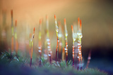 Evening Moss Photographic Print by Ursula Abresch