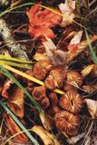 Fall Collection, Autumn in Maine Detail Photographic Print by Vincent James
