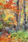 Autumn Fall Color Dream, Acadia National Park Photographic Print by Vincent James