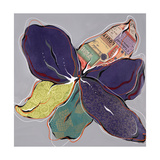 New Natural II Giclee Print by Sydney Edmunds