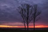 Sunrise Trees at Ogunquit, Maine Coast Photographic Print by Vincent James