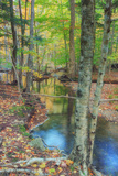 Autumn Forest Stream, Acadia National Park Photographic Print by Vincent James