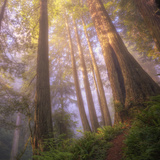 Misty Walk Into Del Norte Coast Redwoods (Square) Photographic Print by Vincent James