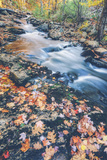 Scene By An Autumn Brook - Bar Harbor, Maine Photographic Print by Vincent James