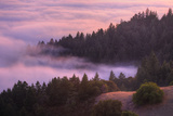 Fog and Tree Design at Sunset, Mount Tamalpais Photographic Print by Vincent James