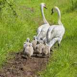 Following Mum and Dad Photographic Print by Adrian Campfield