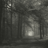 Woodland Quiet Photographic Print by Doug Chinnery