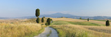 Track through Rolling Landscape, Cypress Trees. Photographic Print by Martin Ruegner