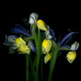Blue Iris Photographic Print by Magda Indigo