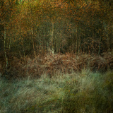 Natures Textures Photographic Print by Doug Chinnery