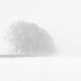 Snowy Trees Photographic Print by Doug Chinnery