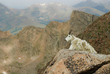 Rocky Mountain Goat Photographic Print by Robin Wilson Photography