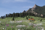 Wildflowers and the Flatirons, Chautauqua Park Photographic Print by John Kieffer