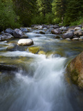 Usa, Colorado, River Flowing through Forest Photographic Print by John Kelly