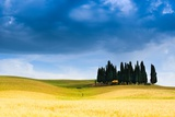 Cypress Trees in Val D'orcia Photographic Print by Sergio Amiti