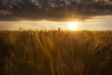 Sunrise Stampa fotografica di Marco Carmassi
