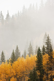 Mountain Fog in Colorado Photographic Print by Don Grall