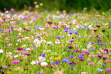 Field of Flowers in Paintography Photographic Print by Philippe Sainte-Laudy