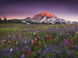 Colorful Flowers in Rainier National Park Photographic Print by Geoffrey Schmid