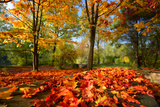 Colorful Autumn Photographic Print by Philippe Sainte-Laudy