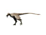 Saurornitholestes Dinosaur Prints