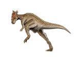 Dracorex Dinosaur Poster