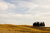 Cypress Trees, Tuscany, Italy Photographic Print by Ari Espay and Liza Politi