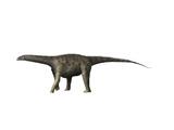 Saltasaurus Dinosaur Prints