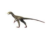 Sinocalliopteryx Dinosaur Posters