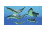 A Group of Xenacanthus Prehistoric Sharks Posters