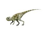 Staurikosaurus Dinosaur Prints