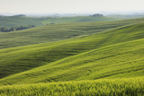 Hilly Countryside and Farmhouse in Tuscany Photographic Print by Cornelia Doerr