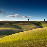 Cypress Trees on Top of Rolling Field and Blue Sky Photographic Print by Michele Berti