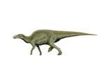 Edmontosaurus Dinosaur Prints