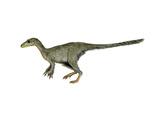 Dilong Paradoxus Dinosaur Art