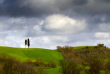 The Cypresses Twins Photographic Print by Matteo Cerreia Vioglio