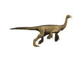Struthiomimus Dinosaur Print