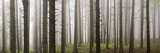 Parco (Park) Delle Foreste Casentinesi, a Wood Photographic Print by  Maremagnum