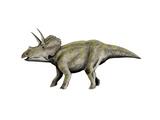 Eotriceratops Dinosaur Prints