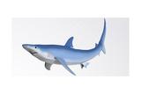 Blue Shark Profile Art