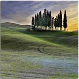 Tuscan Sinuosity Photographic Print by  nespyxel