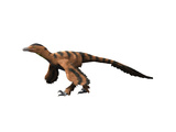 Sinornithosaurus Dinosaur Prints