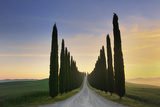 Rural Road Lined with Cypress Trees Photographic Print by Cornelia Doerr
