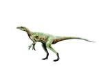 Eoraptor Dinosaur Posters