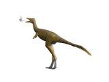 Shuvuuia Dinosaur Prints