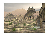Stegosaurus Dinosaurs Searching for Water in a Desert Landscape Prints